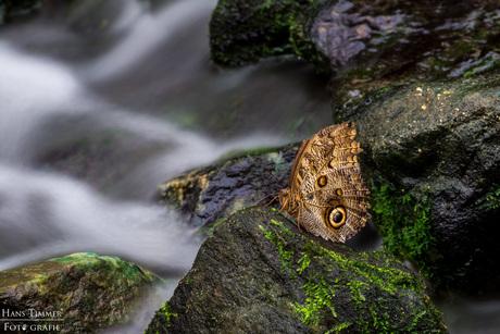 Vlinder bij de stroomversnelling