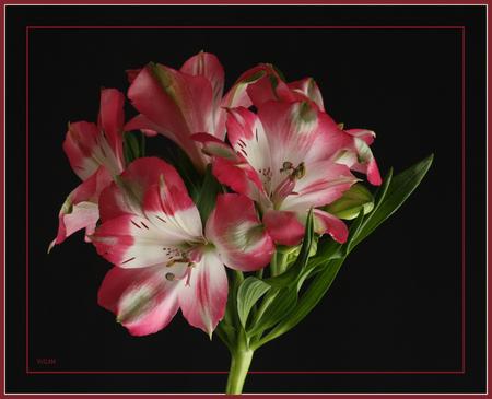 Roze wolk..... - Een ander boeket..... Een mooi roze wolk vind ik het.  Iedereen bedankt voor de reactie,s bij de vorige foto  Ik wil iedereen alvast een fijn we - foto door wilma71_zoom op 19-05-2011 - deze foto bevat: roze, boeket, wilma, wolk bloemen