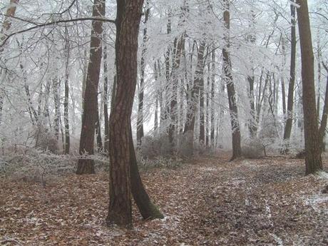sneeuw18 (Small).JPG