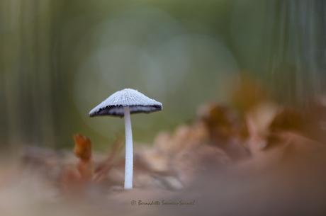 Herfst in het eikenbos