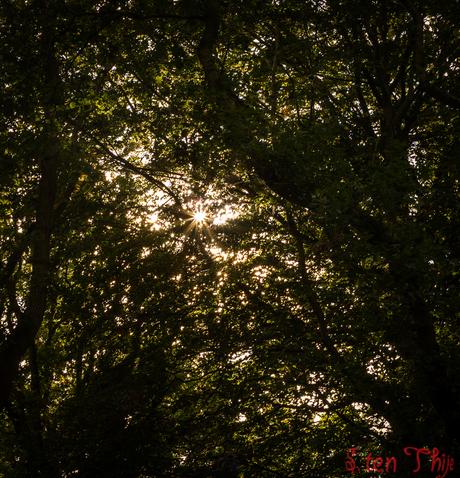 Laatste nazomer middag zonne stralen