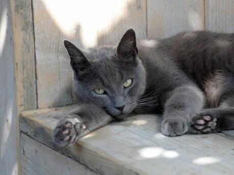 Onze kat op een warme dag