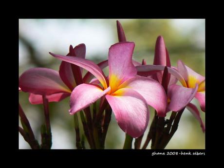 Boom bloem