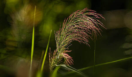 quite some grass - Mooi Limbabwe  . canon 7d mark II Sigma 150 - 600 mm lens - foto door boehle op 05-09-2019 - deze foto bevat: natuur, licht, tegenlicht
