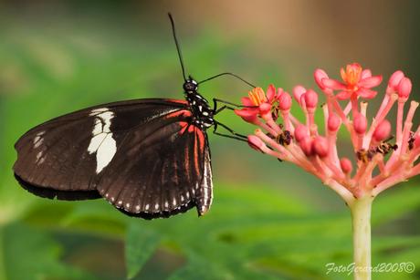 Vlinders in artis 4