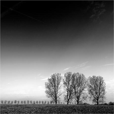 Bomenrijen