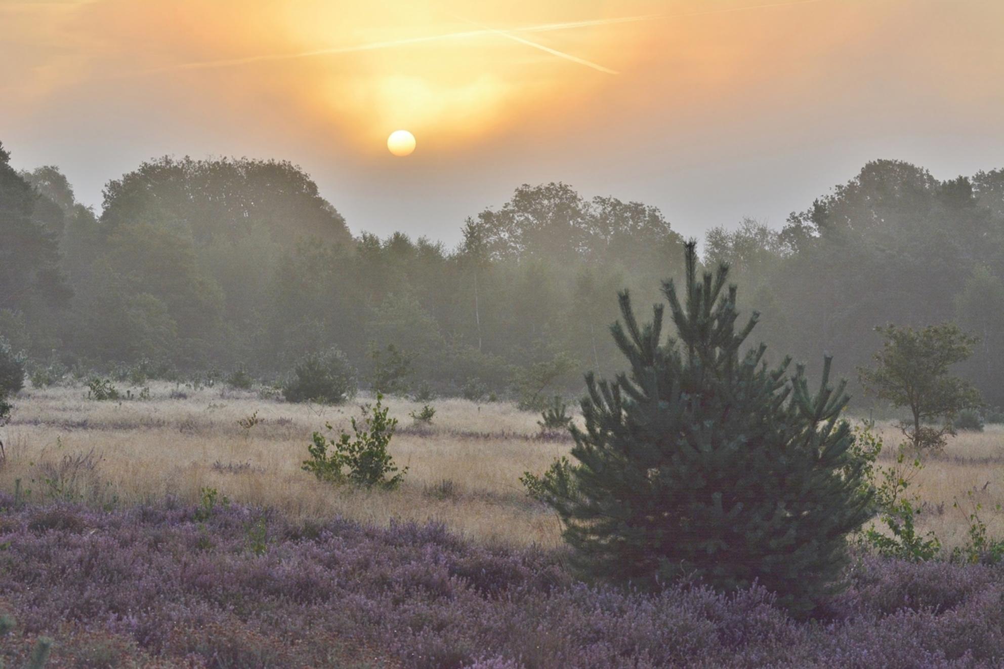 ochtendstond heeft goud in de mond - een week geleden.... wat ben ik blij dat ik die dag gespijbeld heb; Wat een verschil met vandaag! - foto door ingebeeld op 16-09-2015 - deze foto bevat: kleur, bomen, hei, stilte, zonsopgang, sallandse heuvelrug - Deze foto mag gebruikt worden in een Zoom.nl publicatie