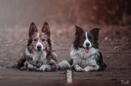 mijn eigen Bonnie en Clyde - Mijn eigen Bonnie an Clyde ...Joy en Jazz ... Best friends forever - foto door jaime2205 op 20-01-2016 - deze foto bevat: dieren, huisdier, bos, hond