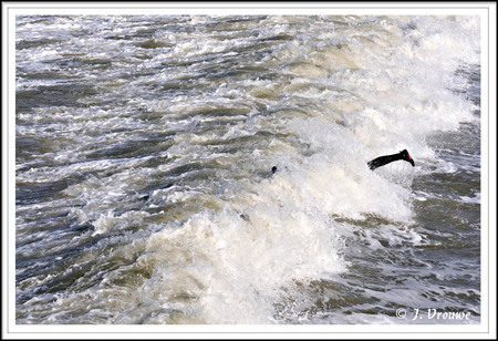 Drenkeling? - Een surfer die bij de pier van IJmuiden kopje onder ging. - foto door janv2 op 03-11-2013 - deze foto bevat: wind, storm, surfer, pier, surfen, golf, been, ijmuiden