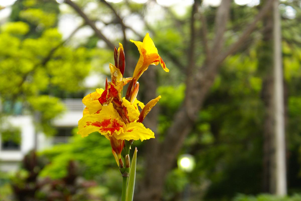 Yellow - Broer of anderzijds familie van Red. - foto door Erik-54 op 15-04-2021 - locatie: Funchal, Portugal - deze foto bevat: geel, yellow, bloem, vakantie, portugal, madeira, bloem, fabriek, bloemblaadje, terrestrische plant, boom, natuurlijk landschap, takje, bloeiende plant, wildflower, pedicel