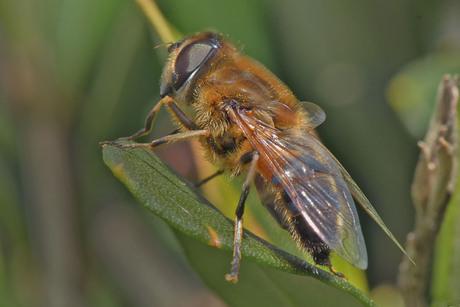 Onvoorstellbare bijvlieg