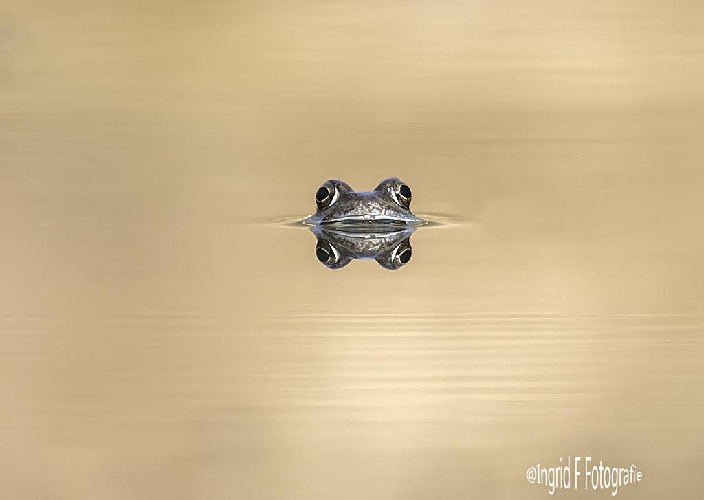 De wacht - De kikker hield de wacht,links lagen aardige kluiten dril - foto door if.veld op 10-04-2021 - deze foto bevat: fabriek, vliegtuigen, voertuig, luchtvaart, vliegtuig, lettertype, militair vliegtuig, vleugel, lucht- en ruimtevaartfabrikant, modeaccessoire
