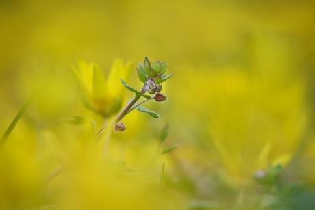 Eenzaam tussen het geel.