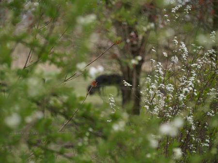 lente - lentekleuren in het park - foto door jan-damen op 16-04-2021 - locatie: Zundert, Nederland - deze foto bevat: vogel, fabriek, takje, bek, veer, piciformes, terrestrische dieren, vleugel, dieren in het wild, boom
