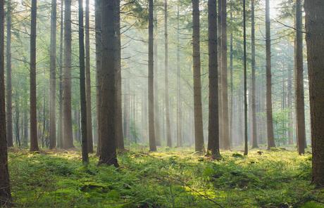 Ochtendwandeling in het bos II
