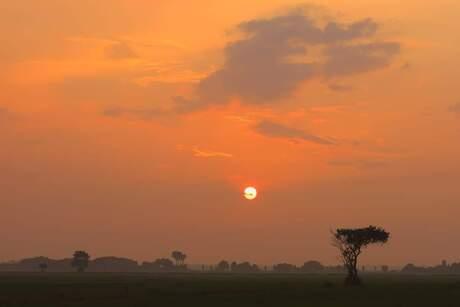 Fryske savanne