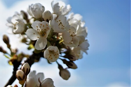 BLOESEM - IT IS COMING... - foto door jh- op 16-04-2021 - deze foto bevat: bloem, lucht, bloemblaadje, fabriek, takje, bloesem, bloeiende plant, stuifmeel, boom, macrofotografie