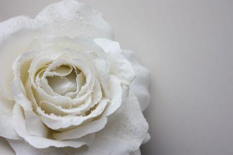 witte bloem