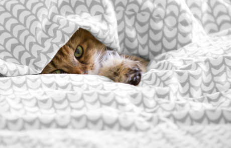 Poes in bed