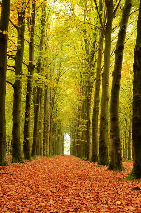 Herfst Laan Eerde
