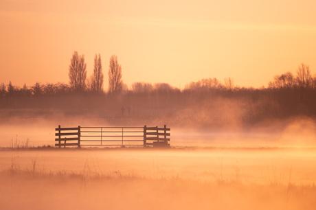 Gouden mist momentje
