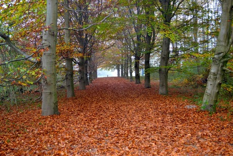 herfst in Almere