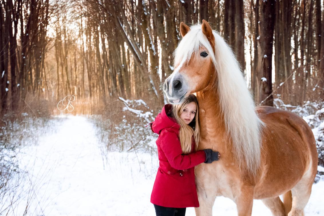 Amy & Haflinger Christy - Hoewel het een koude sneeuwdag was, scheen de zon superFel! Wat een mooie sfeer geeft in deze foto. - foto door PSphotography op 03-03-2021 - deze foto bevat: zon, sneeuw, winter, paard, portret, dieren, model, pony, koud, nederland, haflinger, schemering, tiener