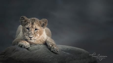 ©TamaraNederkoornPhotography