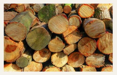 Dik hout