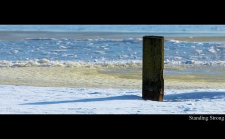 Standing Strong... - Zuidlaardermeer!   ThanX voor de reacties op mijn vorige upload  Stan - foto door stanga op 18-02-2010 - deze foto bevat: stanga