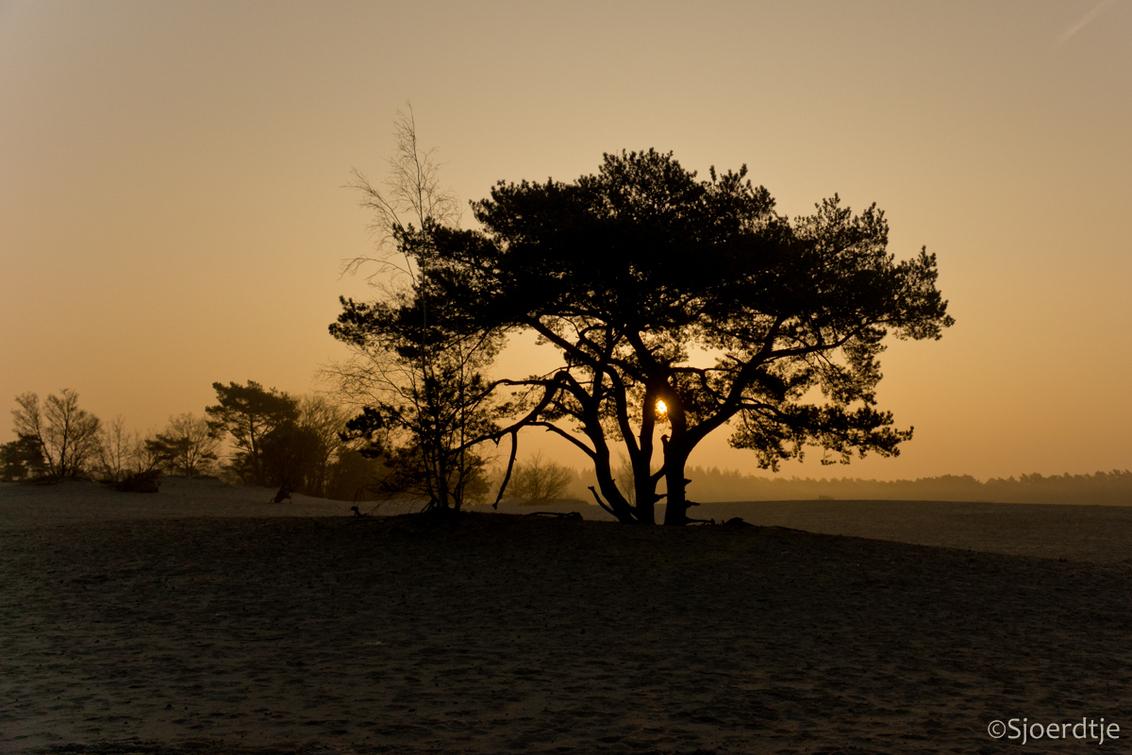 Prachtige ochtend - Een foto uit het archief, ik ben aan het opruimen en dan kom je weer van alles tegen wat toch wel de moeite waard is.  Bedankt voor jullie reacties  - foto door Jora op 21-05-2015 - deze foto bevat: natuur, landschap, duinen, tegenlicht, zonsopkomst, jora