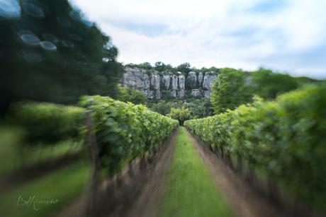 Vineyards France