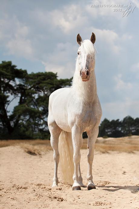 Fairytail horse