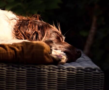 Sleeping dog - - - foto door jeannette2612 op 29-10-2018 - deze foto bevat: foto, hond, daglicht, dog, slapen, heidewachtel