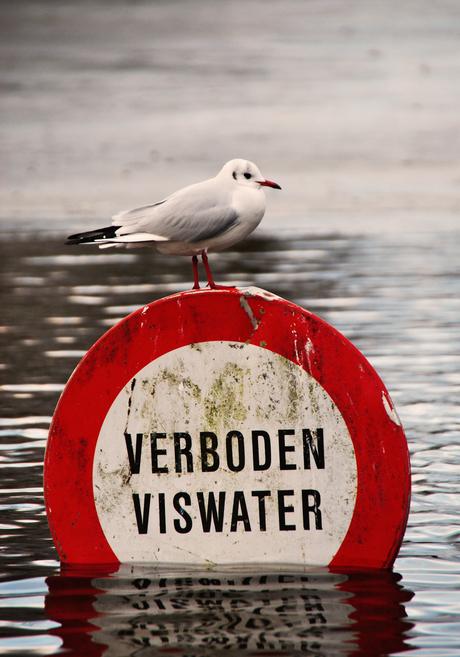 Verboden viswater