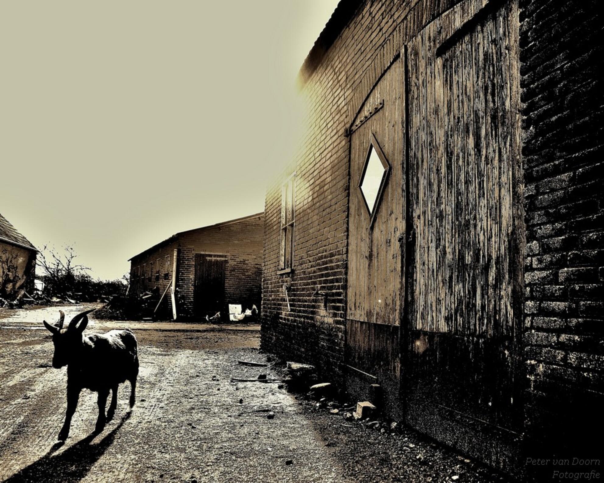 Country Life! - - - foto door pjvdoorn op 09-03-2015 - deze foto bevat: bewerkt, nostalgie, creatief, tonemapping