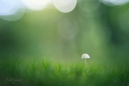 Hello World - De herfst is mijn favoriete seizoen. Natuurlijk hou ik van de lente met de natuur die ontwaakt. Bloemen die uitkomen en lammetjes in de wei. Ook hou  - foto door BiancadH op 09-10-2019 - deze foto bevat: groen, macro, zon, natuur, geel, licht, paddestoel, herfst, mos, bos, nederland, lensbaby, schimmels, bokeh