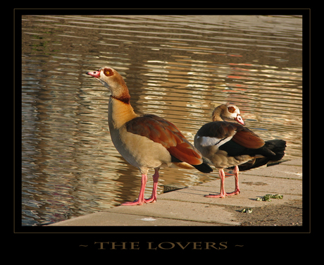 ~ The Lovers ~