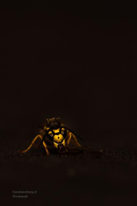 Wespen flitsend