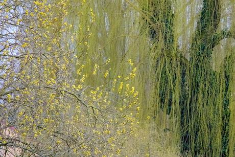 ontluikend voorjaar