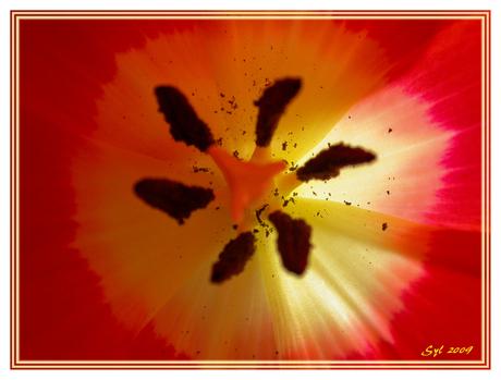 Tulp geniet van de zon