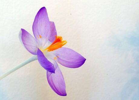 Een bloemetje van Mike gekregen