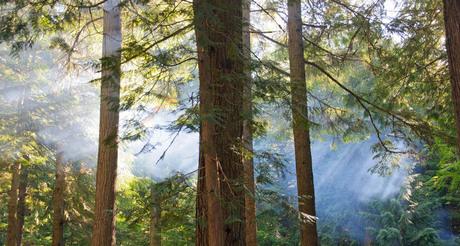 Zonnestralen door bos en rook