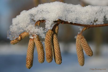 met 'n toefje sneeuw
