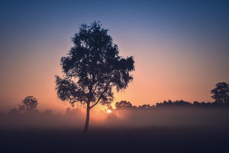 Mist in het landschap