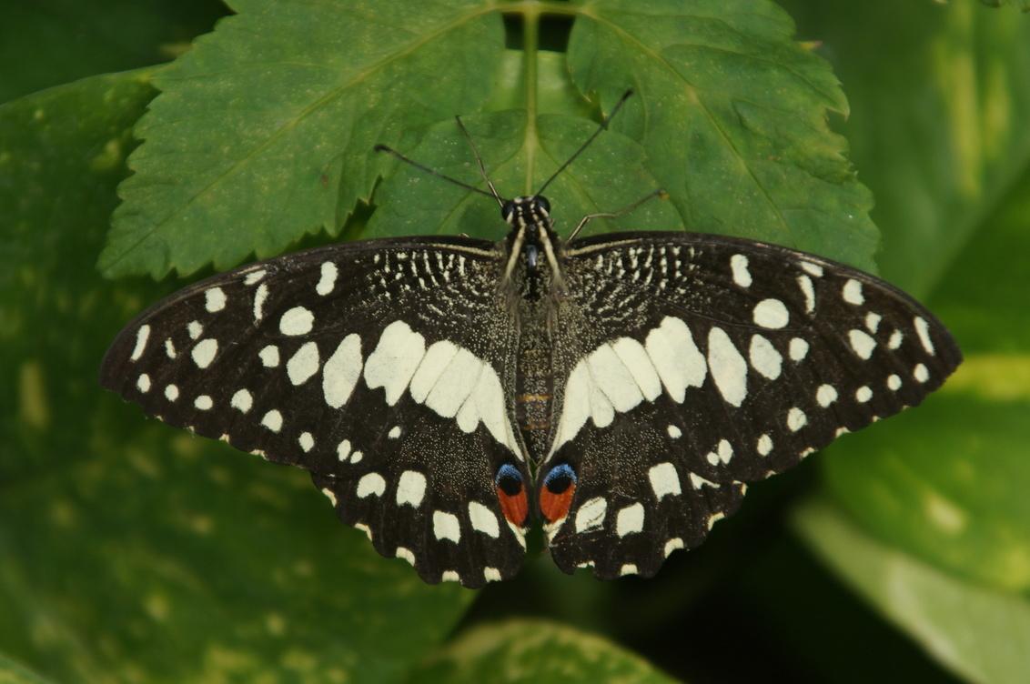 Vlinder - - - foto door Anneke1955 op 28-07-2020 - deze foto bevat: vlinder