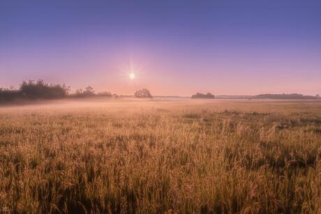 De Stille Kempen tijdens het wegtrekken van de ochtenddauw