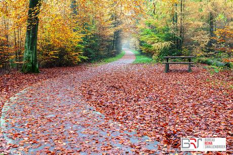 Gasselte met fietspad en bankje in de herfst