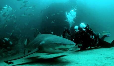 Taking photos of sharks