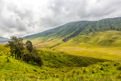 Green Valley, Bromo Tengger Semeru National Park, Java (Indonesia)